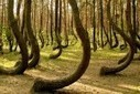 The Haunted, Alien Hotspot, Dimensional Portal Forest of Hoia-Baciu | Strange days indeed... | Scoop.it