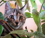 Ces insecticides qui tuent les chats | Toxique, soyons vigilant ! | Scoop.it