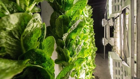 Urban Food Factories - Google+ | Urban Aquaponics Farm | Scoop.it
