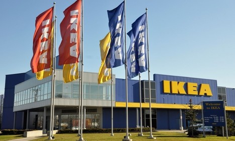 Is Ikea cutting down 600-year-old trees for flat pack furniture? | Sustainability Science | Scoop.it