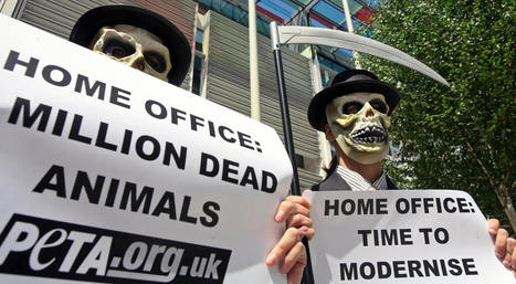 UK Animal Testing Up By 8%, Monkey Tests Rise By Almost One Quarter - Huffington Post UK | National Centre for the 3Rs in the news | Scoop.it