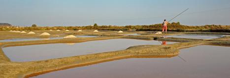 KeltischZeezout.com   Keltisch zeezout is zeer mineraalrijk zout uit Bretagne   Planten en eten   Scoop.it