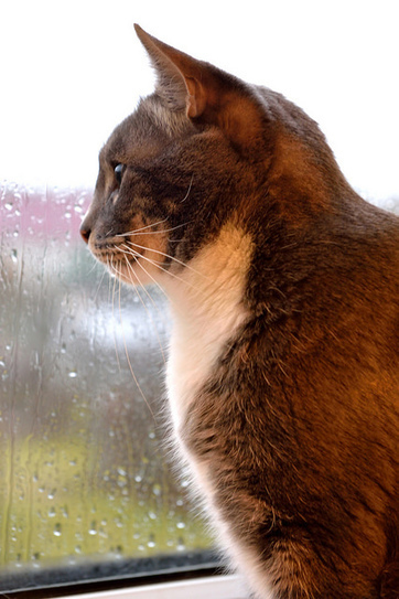 Storm Preparedness for Pets - Are You Ready? | Animal Bliss | Animal Welfare | Scoop.it