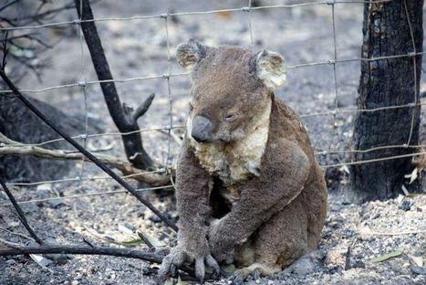 Warming planet to threaten animals - ABC News (Australian Broadcasting Corporation) | Australian animals | Scoop.it