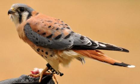 TOP 10 นกที่สวยงามที่สุดในโลก   Top 10 อันดับ   10 อันดับน่าสนใจ   Scoop.it