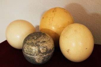 Oldest Globe of New World Carved on Ostrich Eggs? | Ancient Art History Summary | Scoop.it