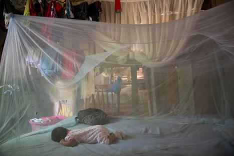 Chikungunya, un dolor que vuela sobre América Latina | Recull de premsa del Servei de Control de Mosquits | Scoop.it