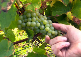 "Climate change boosts wine production in Vermont - CBS News (""win some; lose some"") 