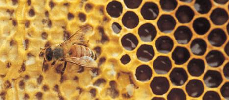 Apithérapie ou comment se soigner avec les abeilles | Finis ton assiette | Scoop.it