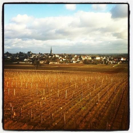 Photo des vignes de Meursault | Tourisme viticole en France | Scoop.it