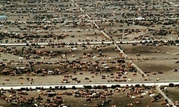 Giving up beef will reduce carbon footprint more than cars, says expert | The Zero Emission Alternative | Scoop.it