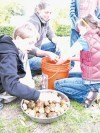 FOCUS ON FOOD: When schoolchildren try their hand at gardening it leads to a... CROP OF FARMERS | environmental matters, self sufficiency and health | Scoop.it