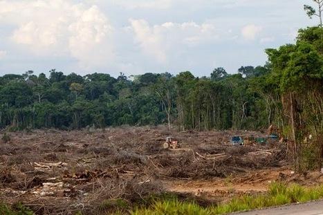 Impactos Ambientais causados por barragens | Ambiente | Scoop.it