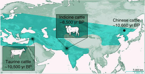Neolithic Chinese People First Tamed Cattle Over 10000 Years Ago - Sci-News.com | Neolithic | Scoop.it