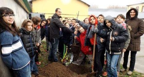 Les 6e du collège ont planté un figuier dans la cour | CDI collège Cransac | Scoop.it