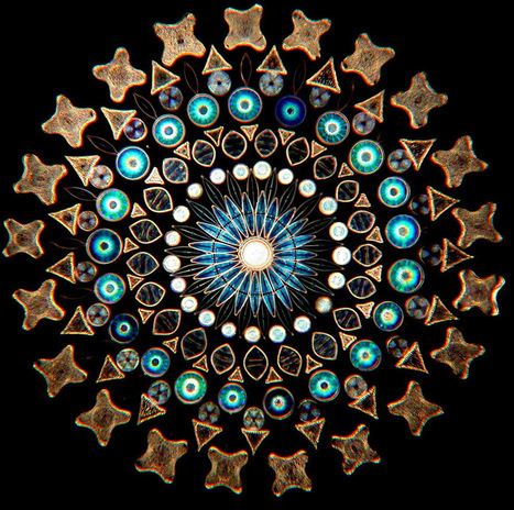 Contemporary Artistic Arrangements of Microscopic Diatoms by Klaus Kemp | Culture and Fun - Art | Scoop.it