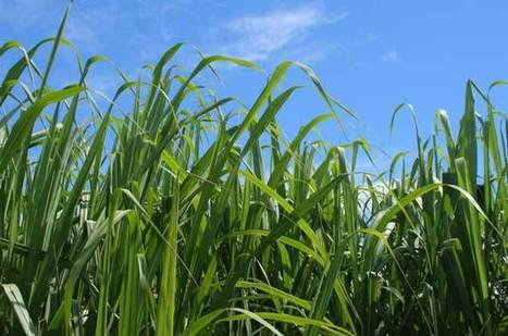 A win-win-win solution for biofuel, climate, and biodiversity | Sustain Our Earth | Scoop.it