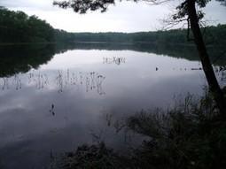 Leaser lake gets more fish habitat – StructureSpot   Fish Habitat   Scoop.it