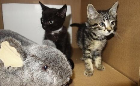 Subway Kittens Living The Dream In Awesome Bushwick Pad | Pet Sitter Picks | Scoop.it