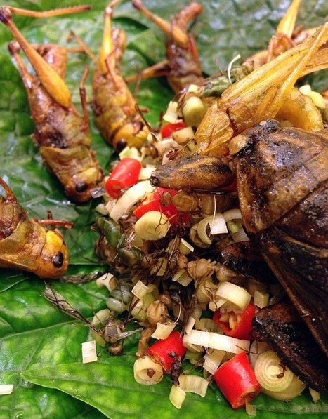 Would YOU eat insects to lose weight? This man says they're delicious | Organic Farming | Scoop.it