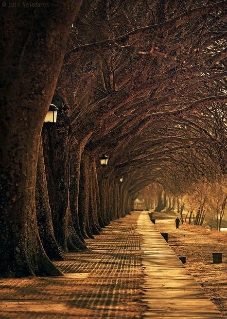 Avenida dos Platanos byLuis Valadares | My Photo | Scoop.it
