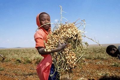 End child labour: Cosatu - The New Age Online   stop child labour   Scoop.it