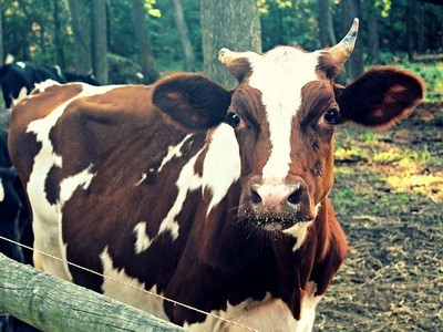 How Slow Money Financing Helps Food Businesses Grow | The Barley Mow | Scoop.it