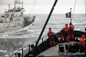 Sea Shepherd Australia :: Abbot breaks election promise on Whales | Nature Animals humankind | Scoop.it