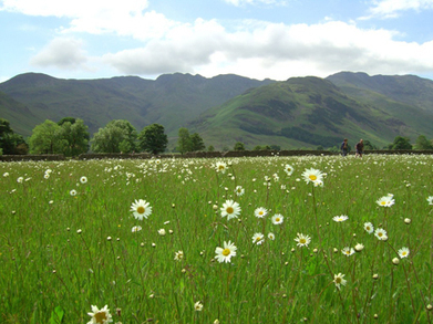 Heritage Lottery money helps Cumbria's threatened hay meadows | 100 Acre Wood | Scoop.it