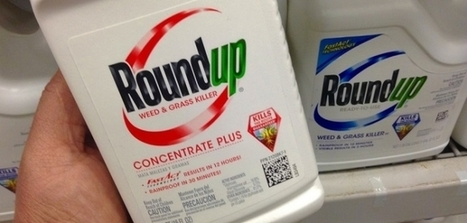 #DANGER 'France Bans sale of monsanto #glyphosate aka #roundup herbicide re. DEADLY 'KIDNEY NECROSIS', Extreme #CARCINOGENIC; banned in other countries' | News You Can Use - NO PINKSLIME | Scoop.it