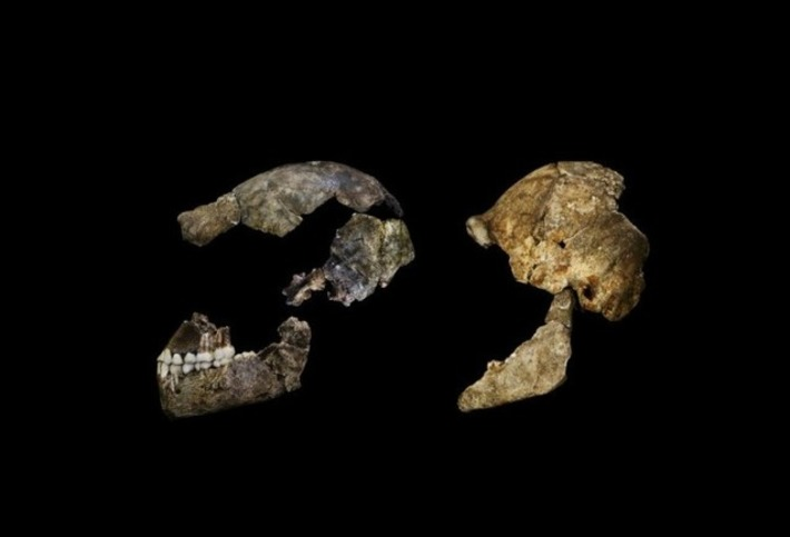 New species of human relative discovered in S.A. cave | Heritage Daily | Kiosque du monde : A la une | Scoop.it