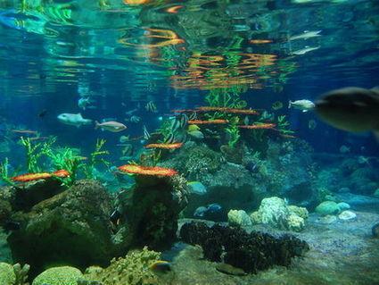 Des chercheurs veulent installer le Wifi sous l'océan   Raconte-moi la mer   Scoop.it