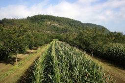 L'agroforesterie peut dynamiser les pays en développement | apiculture31 | Scoop.it