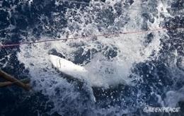 Alivio para los tiburones y las mantas | Infraestructura Sostenible | Scoop.it