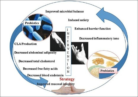 Dysbiosis, Inflammation and Chronic Disease | chronic inflammation and disease | Scoop.it