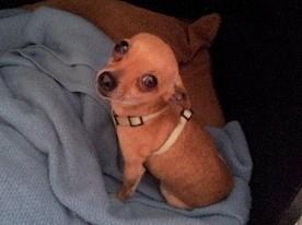Joey's Journey Home | Pet Health and Happiness | Scoop.it