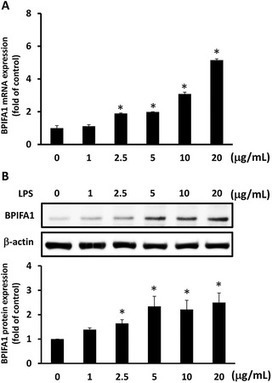 Interleukin-13 Inhibits Lipopolysaccharide-Induced BPIFA1 Expression in Nasal Epithelial Cells | Interesting ORL articles | Scoop.it