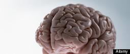 More Evidence of the Link between Mind and Body. | Meditatie & de hersenen | Scoop.it