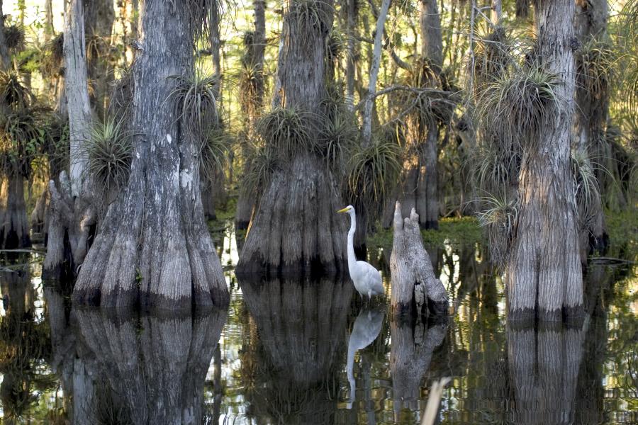 Étude de l'impact du tourisme sur un site Ramsar : États-Unis - Le Parc National des Everglades | Zones humides - Ramsar - Natura 2000