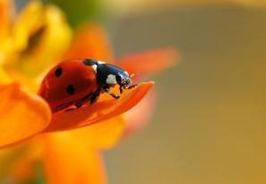 Ces insectes, petites fées du logis et des jardins   pour mon jardin   Scoop.it