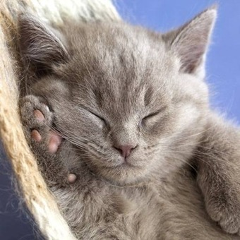 Weekend iPad Wallpapers: One for Cat Lovers — iPad Insight | iPads in Education | Scoop.it