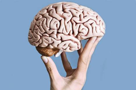 Who's got your brain? The science of shopping uncovered | Neuro Design | Scoop.it