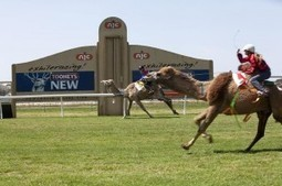 Groups Invited to Celebrate Melbourne Cup Day with Camel Racing in Newcastle | travel and tour world | Scoop.it