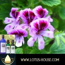 Therapeutic Grade Essential Oils - lotus-house.com   Homemade Natural Shower Gel   Scoop.it