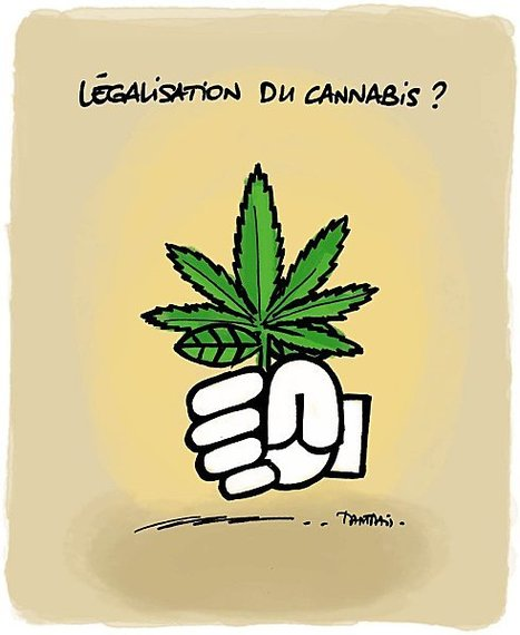 Légalisation du cannabis ? | Baie d'humour | Scoop.it