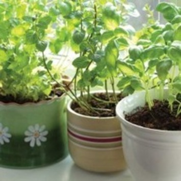 Container Herb Gardens Made Easy | Healthy Lifestyle Plus | Container Gardening | Scoop.it