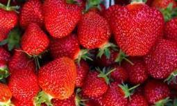 Egypt to export strawberries to the US | Égypt-actus | Scoop.it