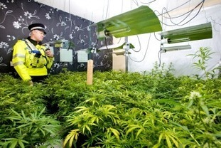 Up in smoke: Alternatives to the war on drugs | SgurdNoRawEht | Scoop.it