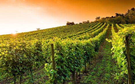 There's much more to German wines than Black Tower and Blue Nun | Vitabella Wine Daily Gossip | Scoop.it
