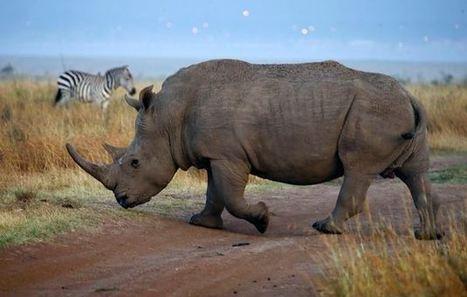 Poaching at Kruger National Park rises over Easter | Kruger & African Wildlife | Scoop.it